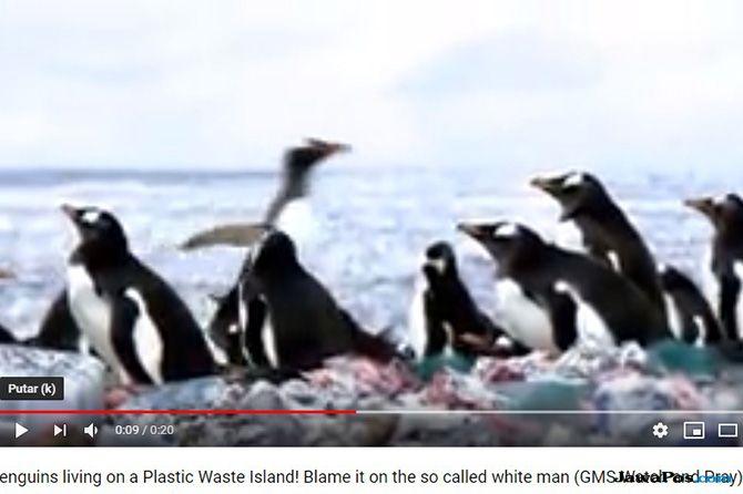 Salah Persepsi dengan Video Penguin di Gundukan Sampah Plastik