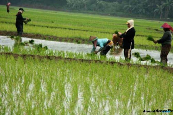 Sektor Pertanian Rawan Korupsi