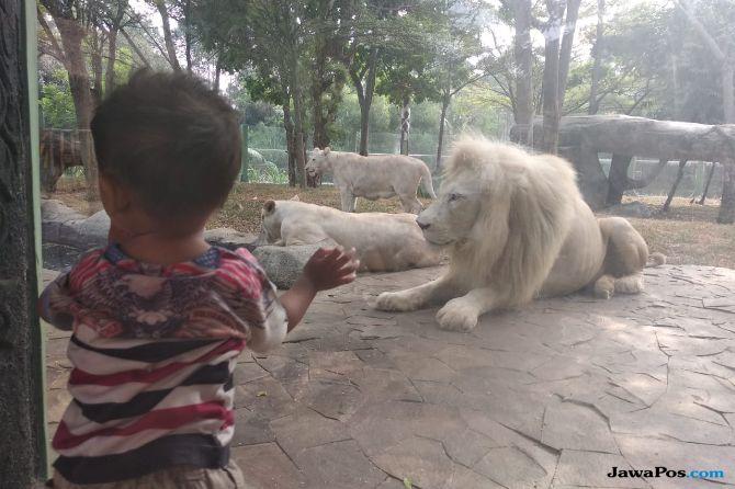 Seram, Ada Singa Putih di Jakarta