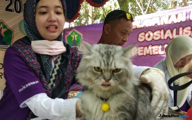 Cegah Rabies pada Kucing, Kenali Ciri-Cirinya