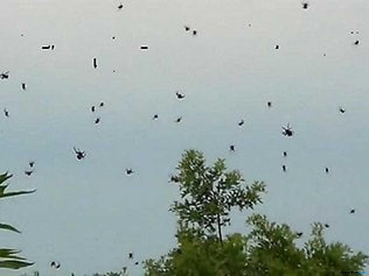 hujan laba-laba, laba-laba, brasil, aneh, unik,
