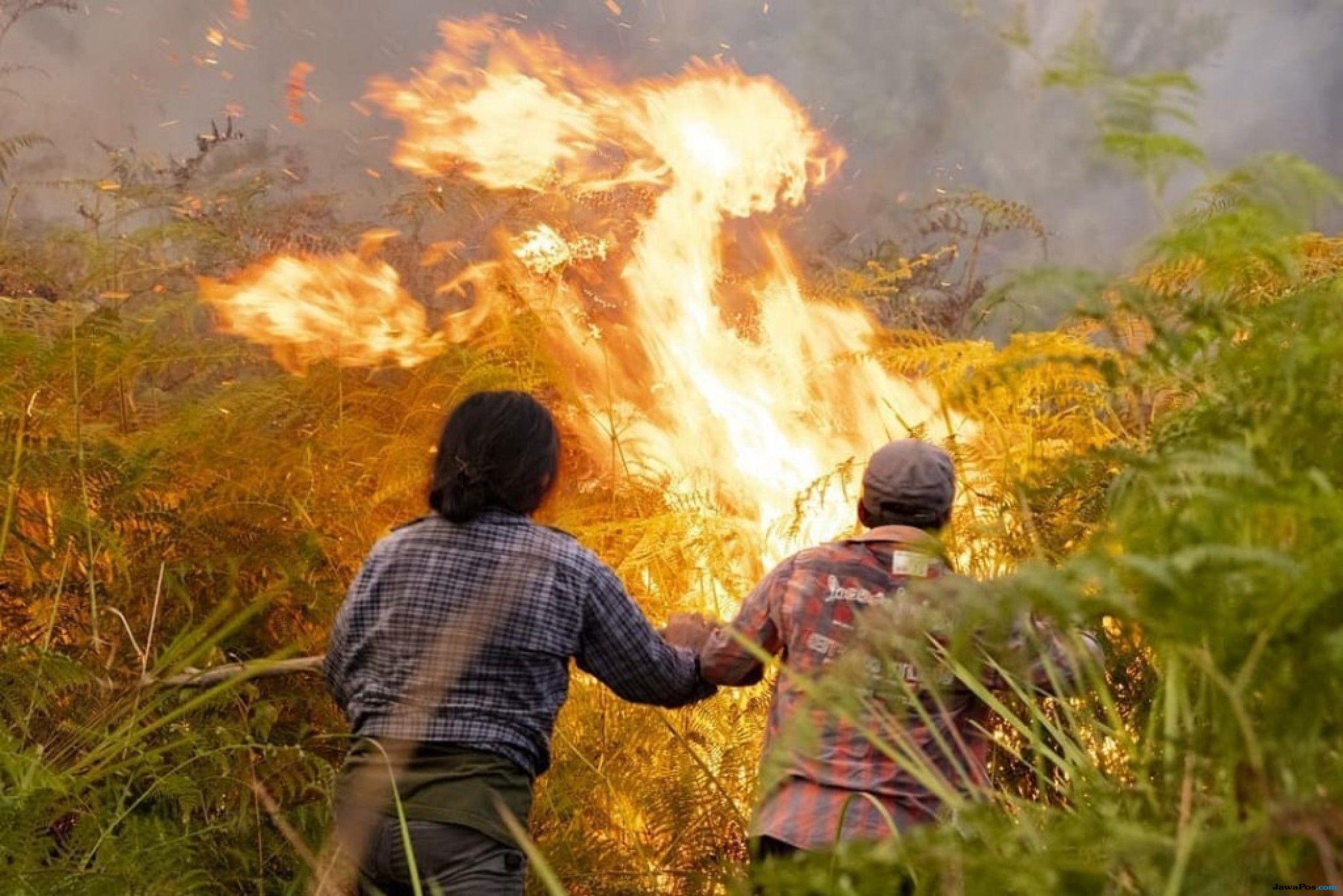 Kebakaran Hutan dan Lahan Nyaris Renggut Nyawa Bayi