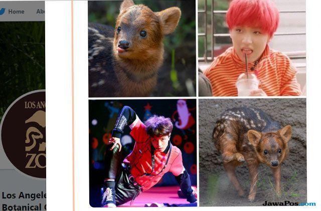 Kebun Binatang Los Angeles Namai Bayi Rusa Pudu dengan Nama Member NCT