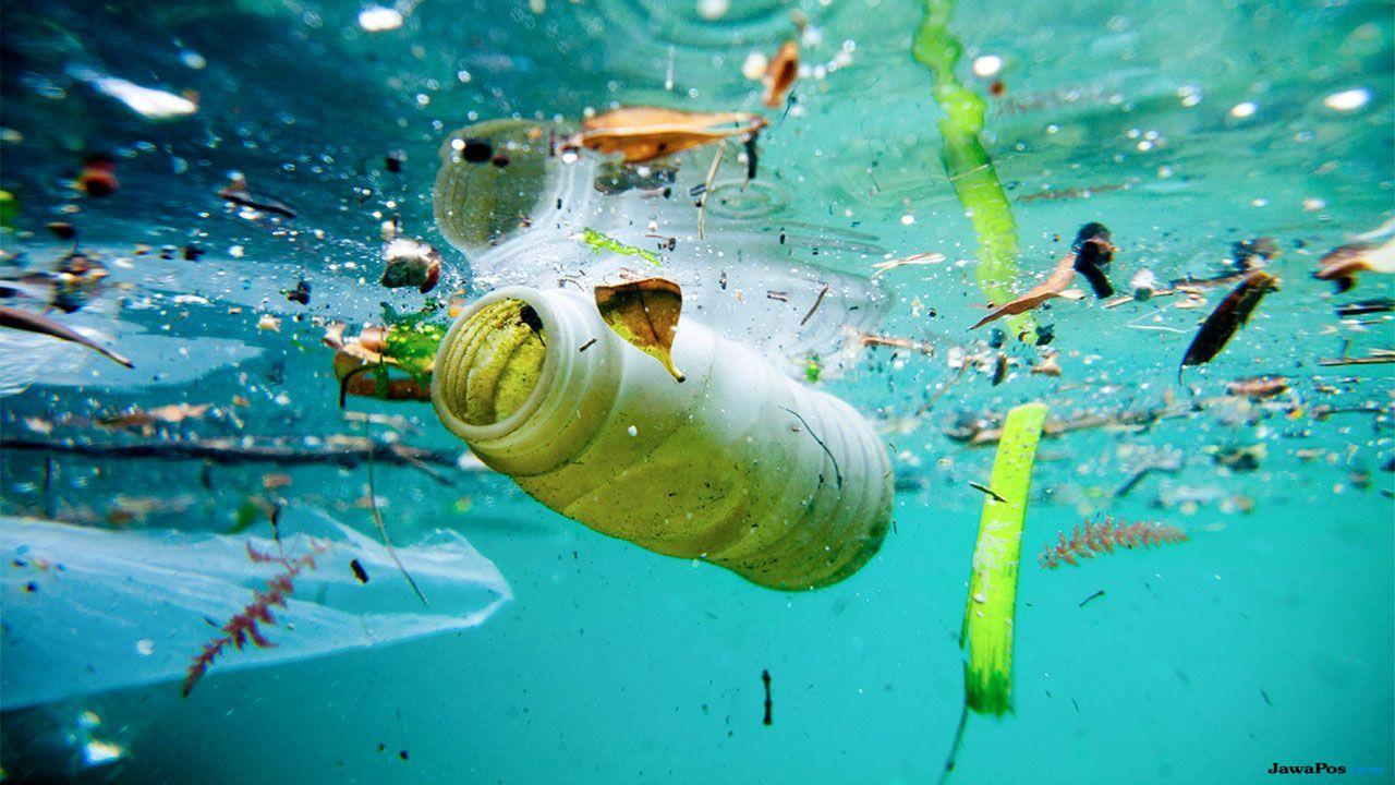 paus pilot, paus, paus makan plastik, plastik,