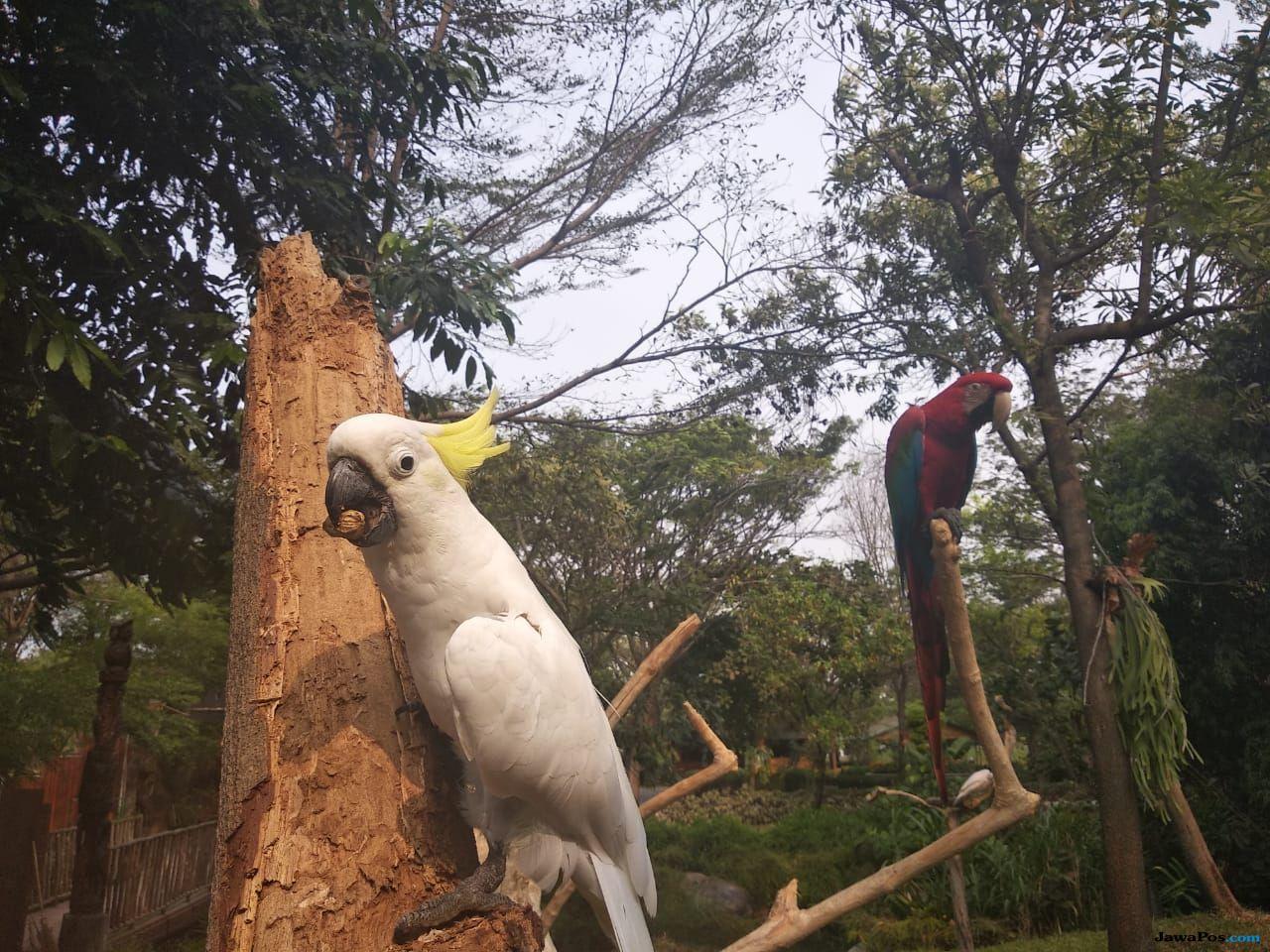Rasakan Sensasi Berbeda Ikut Atraksi Bersama Burung-Burung Pemangsa