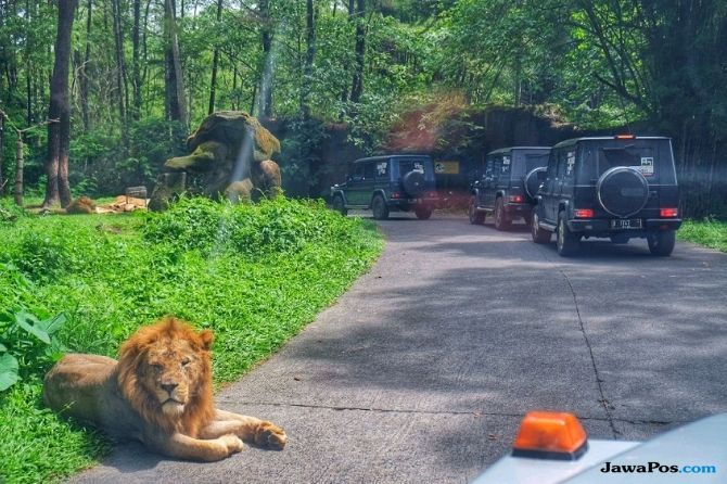 Touring MJI : Dari Edukasi Fauna Hingga Eksplorasi Keindahan Alam Jawa